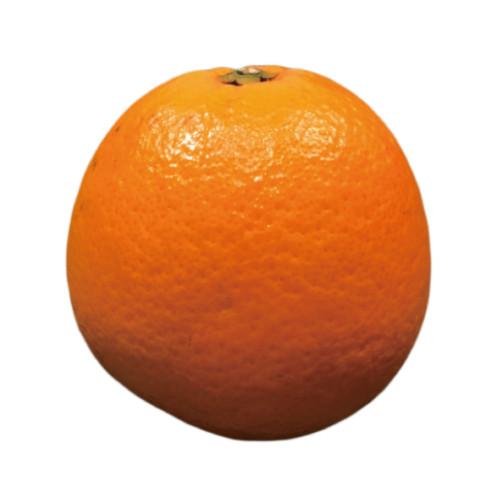 navel orange